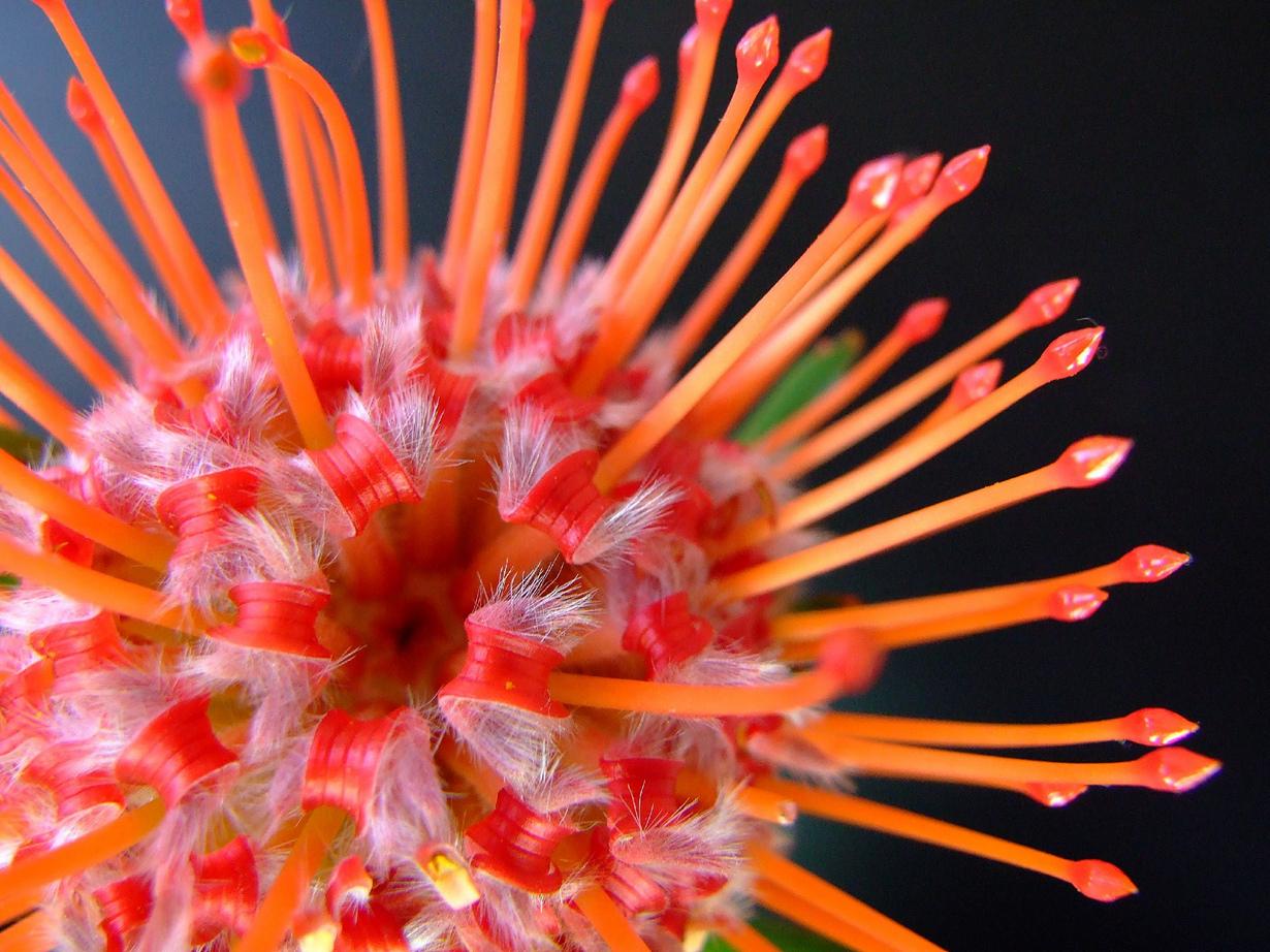 Необычно красивые цветы фото