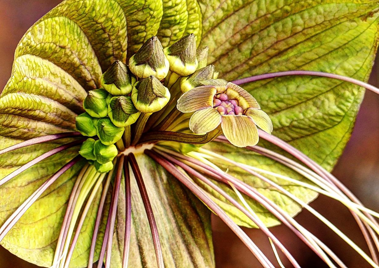 фото красоте растение