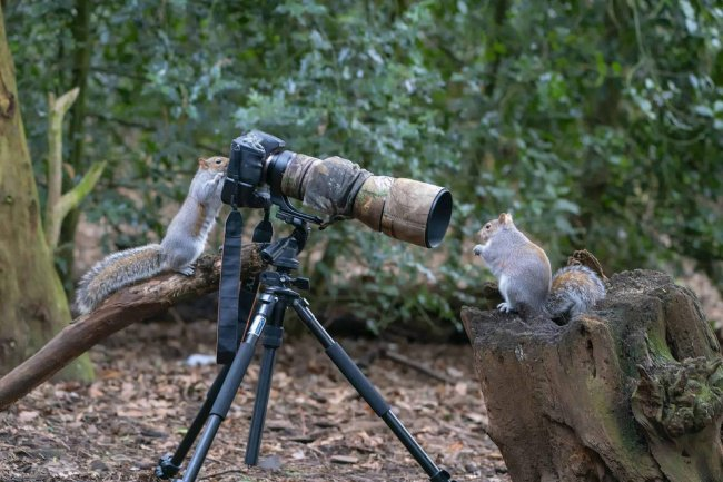 Необычный конкурс Comedy Wildlife Photography Awards 2019