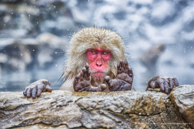Финалисты конкурса Comedy Wildlife Photography Awards 2019